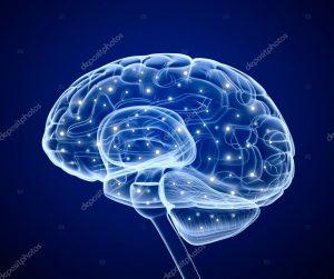 brain 300x251 - brain